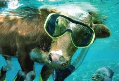 sea-cow-thorvin-animals.jpg?1437578375