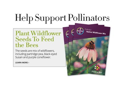 Free Feed a Bee Seed Packet