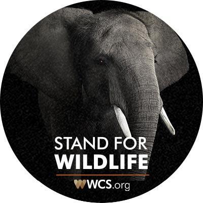 Free-wildcards-sticker