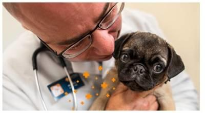 Banfield Pet Hospital - FREE Office Visit and Consultation