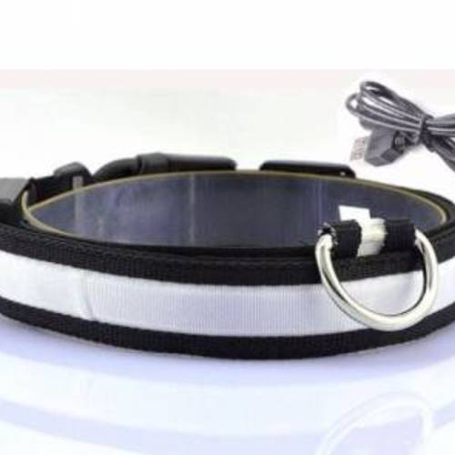 Free Rechargeable LED Dog Collar
