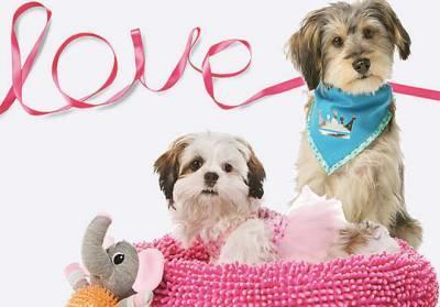 FREE Valentine's Day Photo & Doggie Ice Cream at Petsmart (2/14 Only)