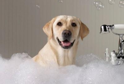 Free Pet Shampoo For Groomers