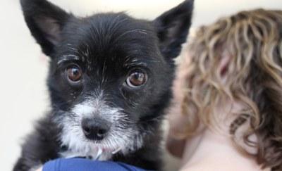 Free Emergency Pet Decals