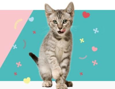 Free Samples from PetSmart on Saturdays