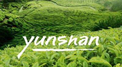 Free Sample of  Keenum Organic Tea