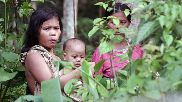 The Orang Rimba's connection to the forest begins at birth