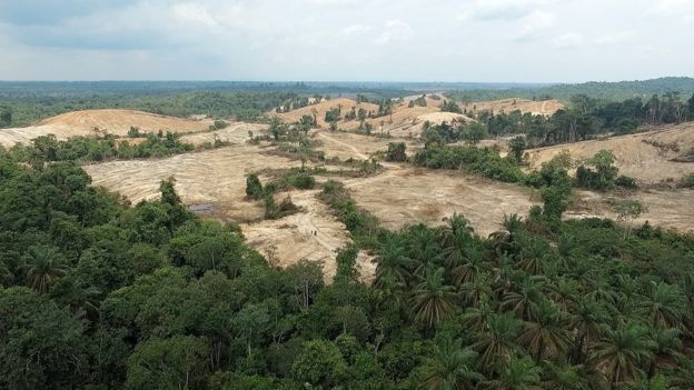 The forests inhabited by the Orang Rimba have been eroded by oil palm plantations