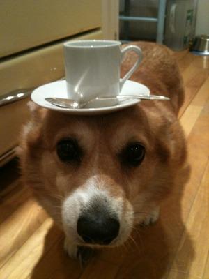 Tea Dog 1