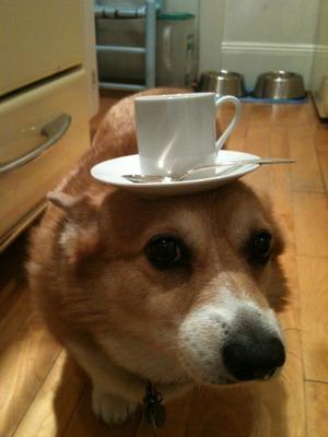 Tea Dog 2