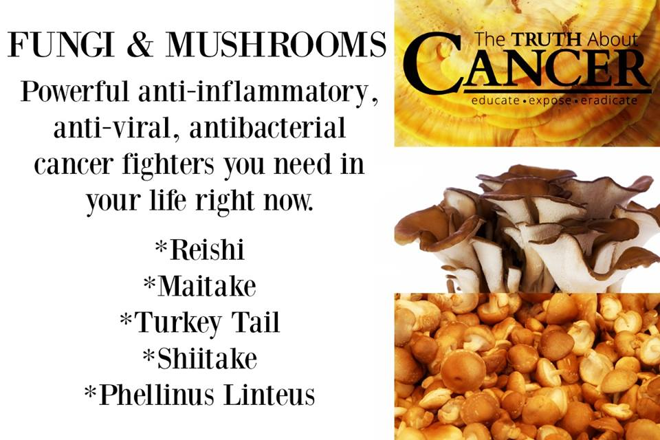 Anti-inflammatory Mushrooms