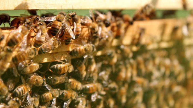 The Honey Festival kicked off on Sept. 7 at the Wagner Institute. ( INDIRA JIMENEZ / TTN )