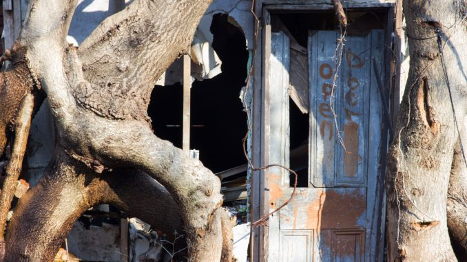 Trees reclaim an abandoned property on North Delhi Street, between Diamond Street and Susquehanna Avenue. | Alex Friend TTN