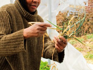 Alia Walker, an administrator for Earth's Keepers, cleans a green onion crop in the greenhouse at the Earth's Keepers garden at the Free Library of Philadelphia's Kingsessing branch on March 10. | Harrison Brink TTN