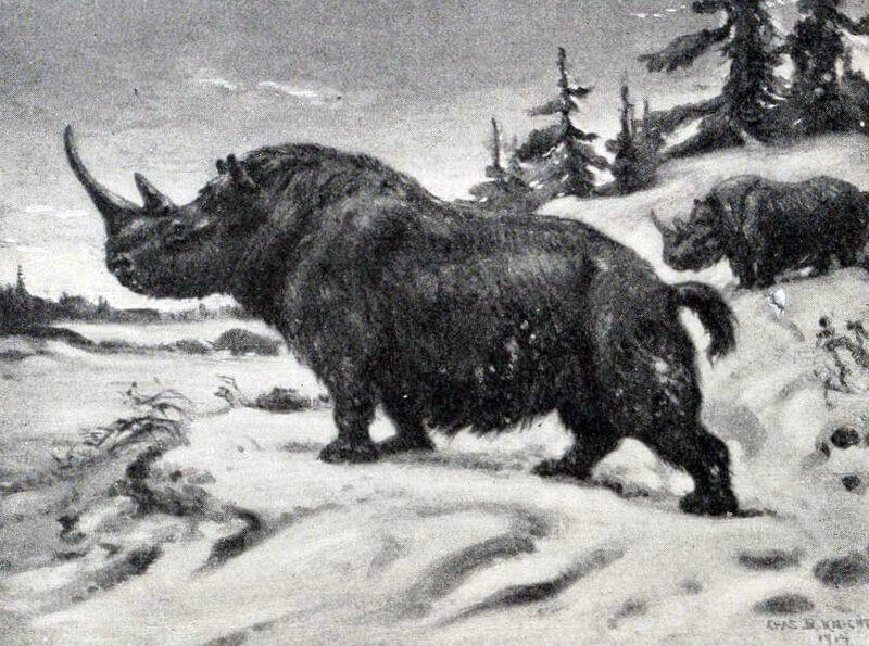Wooly Rhinocerous