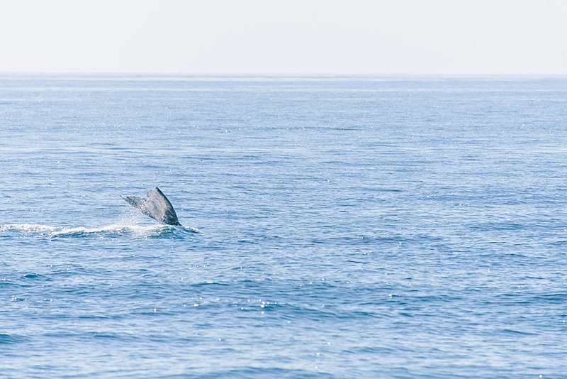 Whale watching in Cabo during the month of March