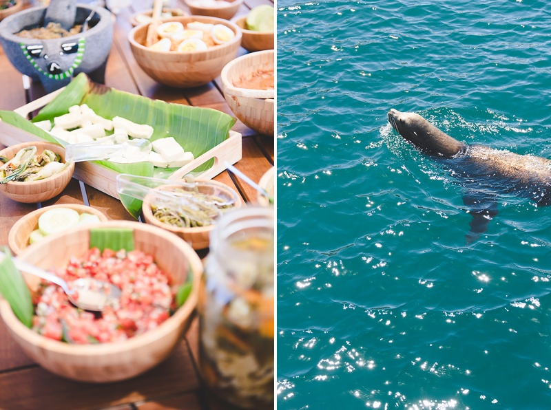Sea lions and all day luxury boat cruises in Los Cabos Mexico