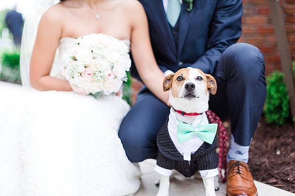 Wedding dog with adorable mint bow tie and little suit