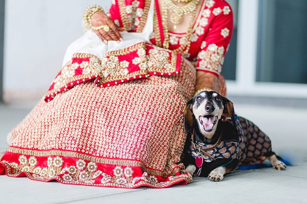 indian wedding dog in virginia