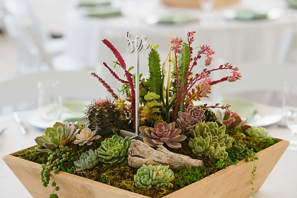 Elegant box of succulents with mini cactus for beach wedding centerpiece