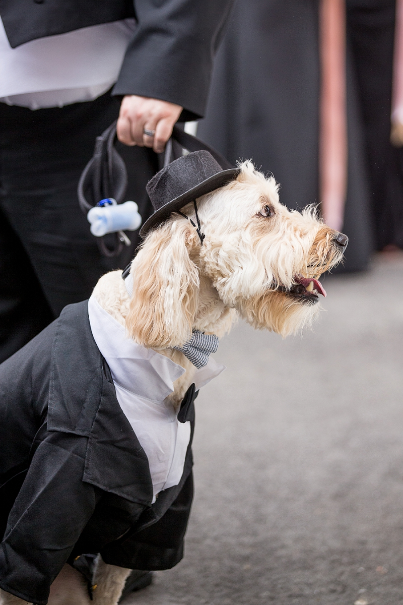 Fluffy wedding dog in a cute custom tux and a little top hat