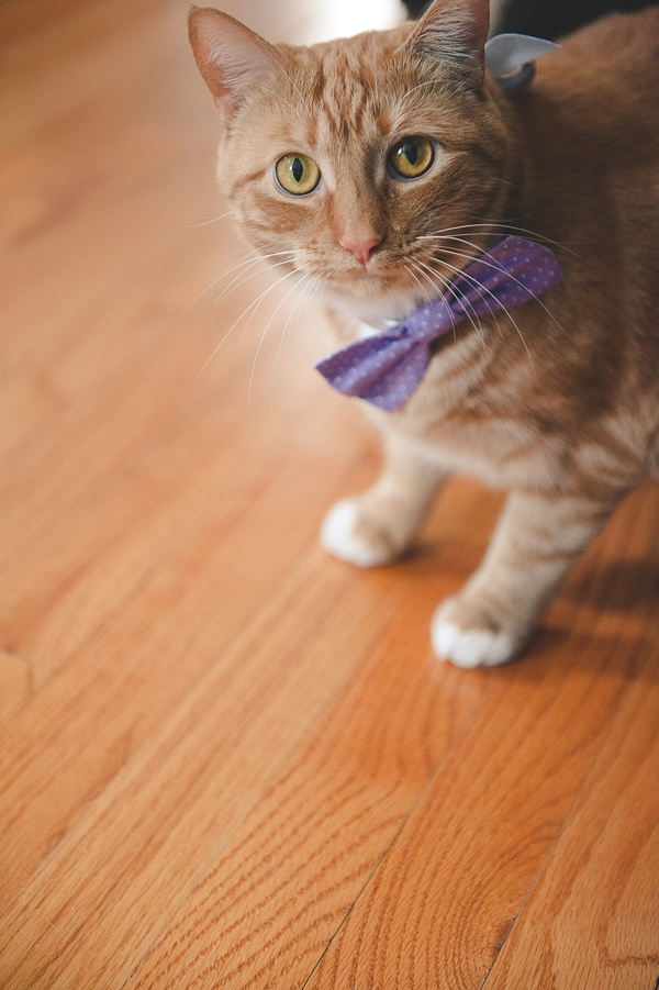 wedding cat in bow tie