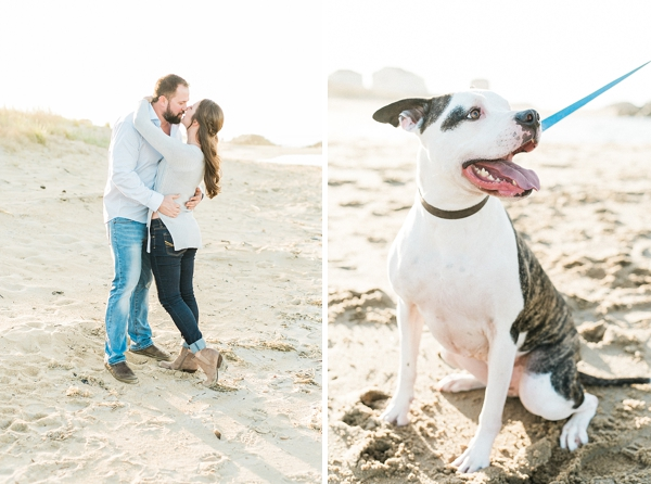Cute pitbull in engagement session
