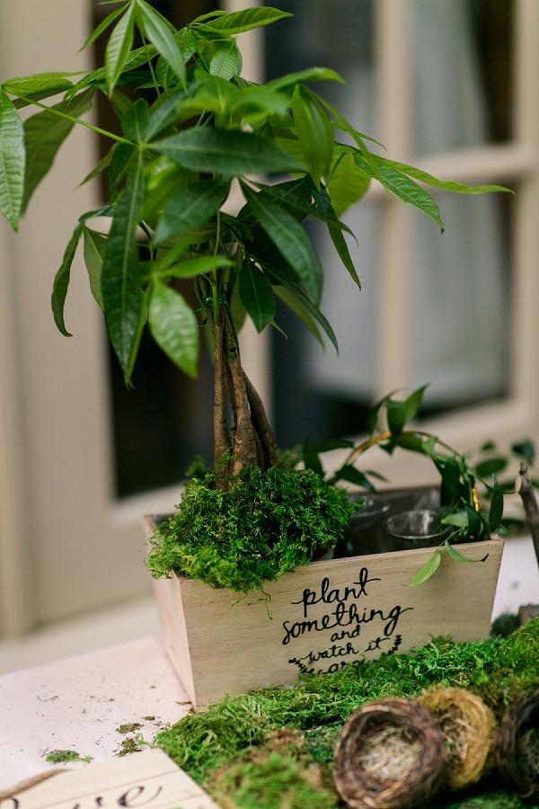 Plant something and watch it grow wedding unity tree