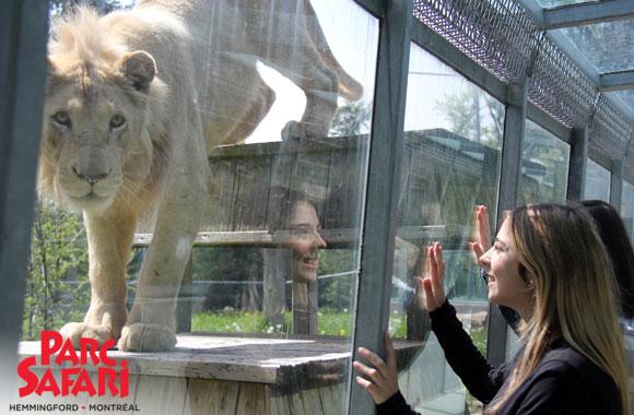 Parc Safari: magical day