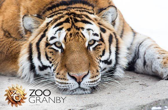 Zoo de Granby!