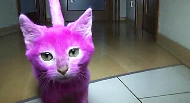 gato rosa muere tras ser pintado
