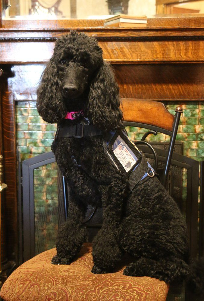 Photo of Ami Jones - Service Dog