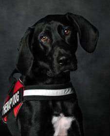 Photo of RALPH FARRAR CANTRELL - Therapy Dog