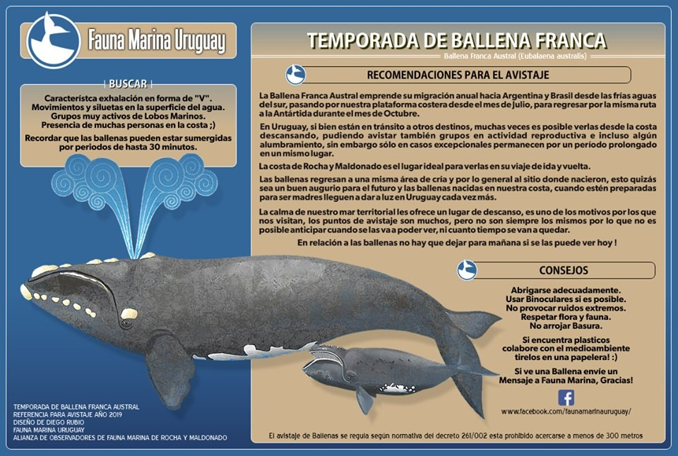 Fuente: Fauna Marina Uruguay
