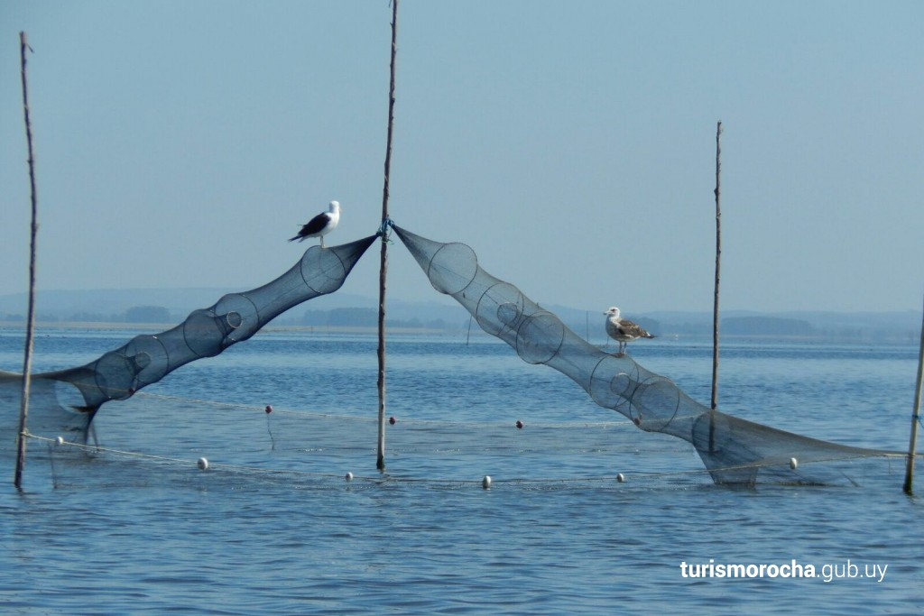 Pesca del camarón en la Laguna de Rocha