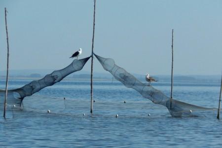 Zafra de pesca de camarón en Rocha