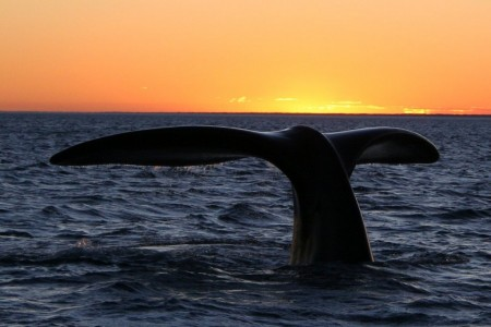 ¡Llegaron las ballenas a Rocha! Comparte tus fotos y videos de avistamientos y los mejores serán premiados
