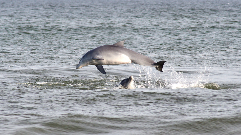 Delfines en La Paloma, Rocha
