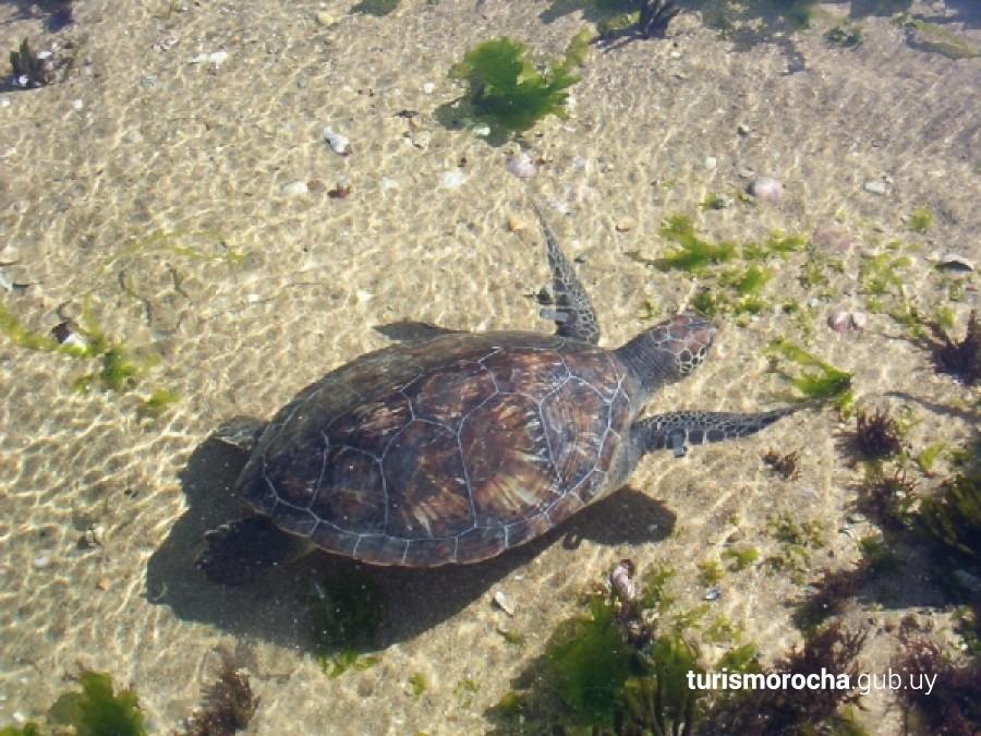 Área de manejo de hábitat y/o especies Cerro Verde e Islas de La Coronilla en La Coronilla