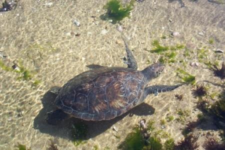 Área de manejo de hábitat y/o especies Cerro Verde e Islas de La Coronilla en Santa Teresa