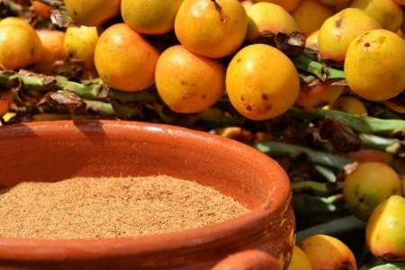 Butiá: fruto nativo por excelencia que se extrae de los Palmares de Rocha
