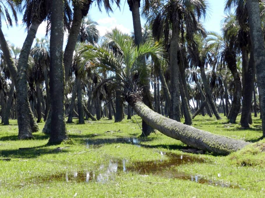Palmares de Rocha, Uruguay