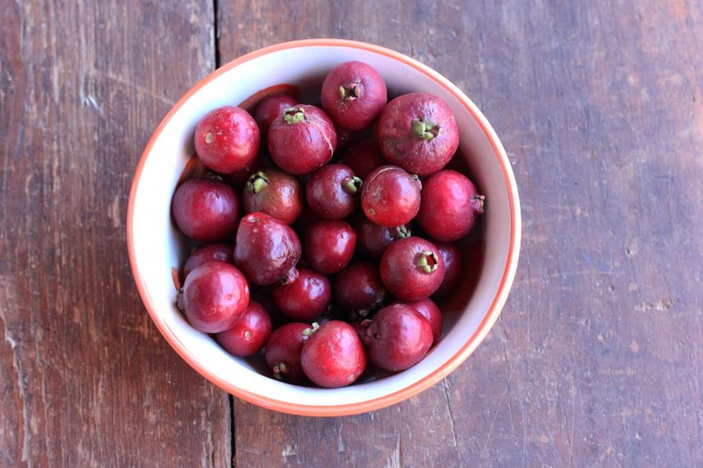 Arazá rojo, fruto nativo de Rocha