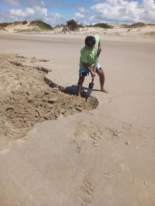 Extracción de almejas amarillas en la costa de Rocha