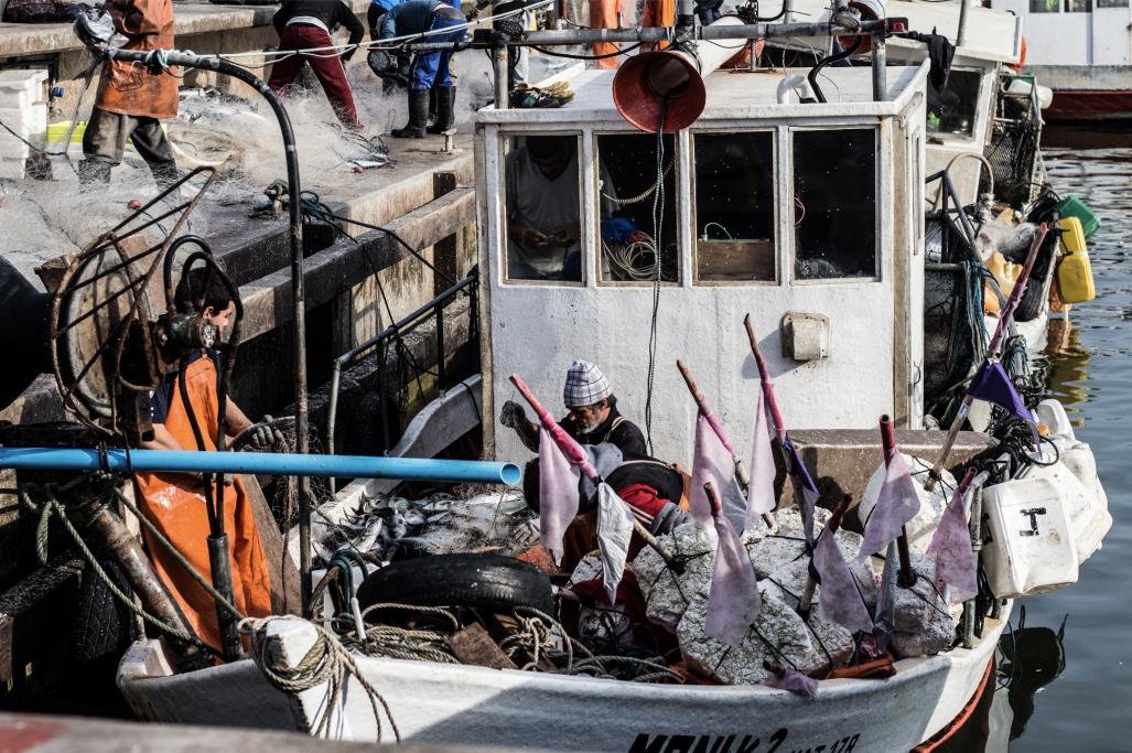 Zafra de pesca de anchoas en Puerto de La Paloma, Uruguay