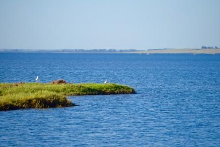 Laguna de Rocha: paisaje protegido del Uruguay