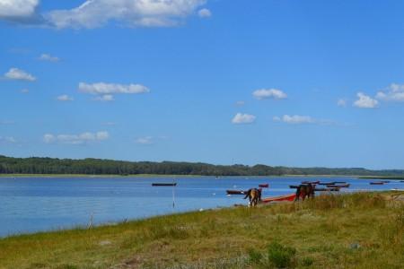 Barcas de pesca artesanal sobre la laguna