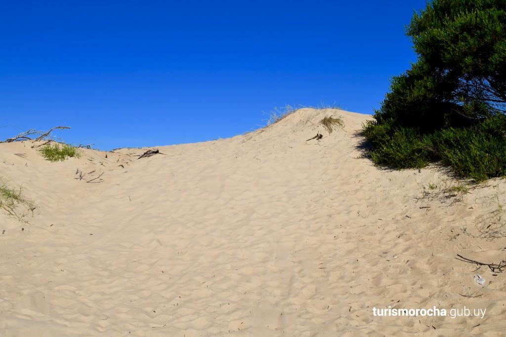 Sistema de dunas y médanos en reconsrucción