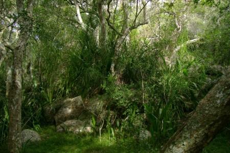 Camino al Cerro Picudo