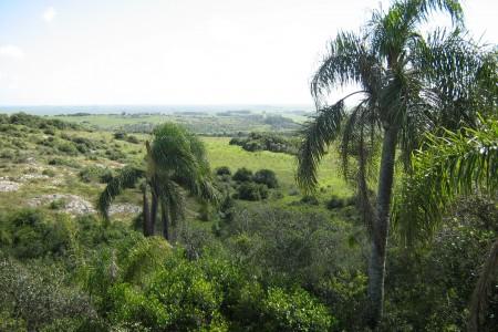 Cerro Picudo